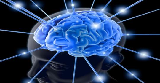 Una puerta abierta al interior del cerebro.