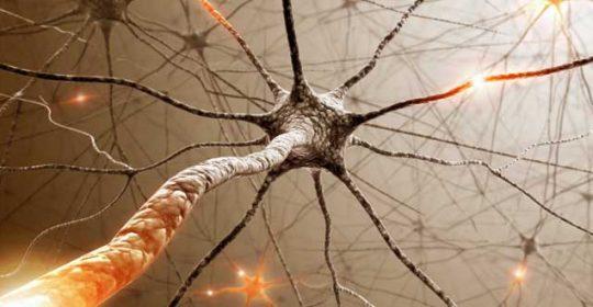 ¿Porqué el colesterol aumenta el riesgo de alzhéimer?