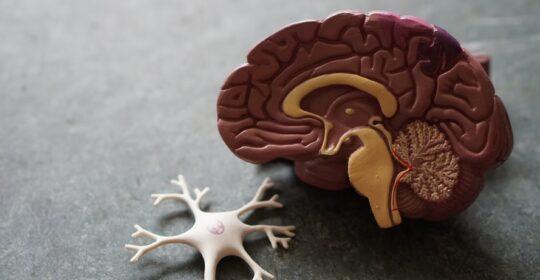 ¿Qué es la trombosis de senos venosos cerebrales, que ha frenado la vacunación con AstraZeneca?